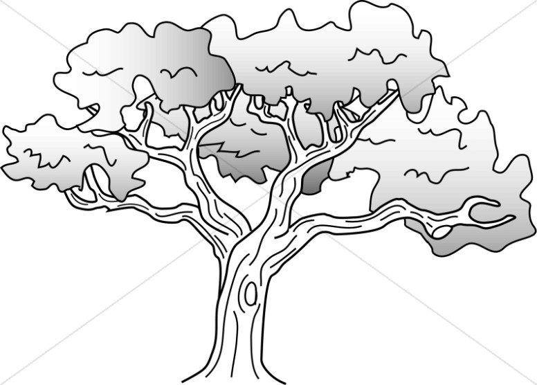 Coloring page of a oak tree clipart svg freeuse stock Simple Oak Tree Drawing | Nature Clipart svg freeuse stock