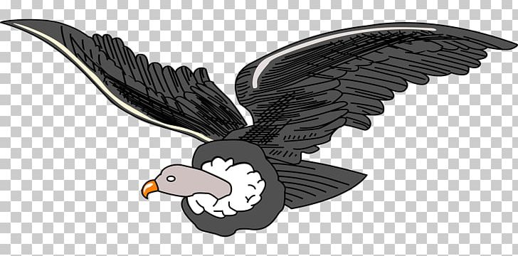 Condors clipart clip art royalty free Andean Condor Andes PNG, Clipart, Accipitriformes, Andean Condor ... clip art royalty free