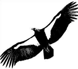 Condors clipart jpg Condor Clipart   Clipart Panda - Free Clipart Images jpg
