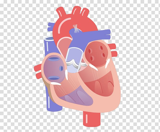 Conduction clipart freeuse download Heart valve Electrical conduction system of the heart ... freeuse download
