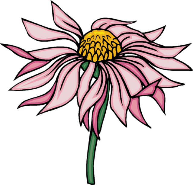 Cone flower clipart image library stock Coneflower clipart - Clipground image library stock