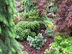Garden naps and artistic. Conifer kingdom