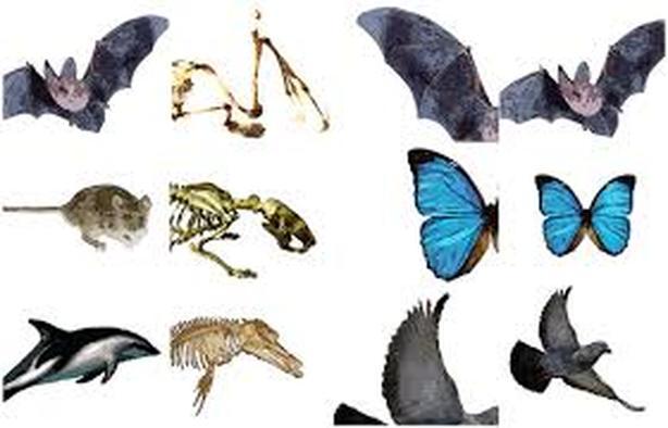 Convergent evolution clipart