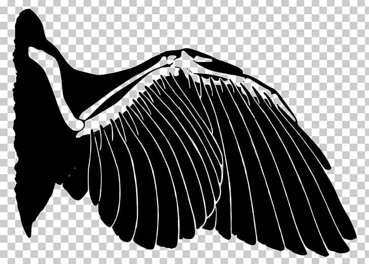 Convergent evolution clipart banner black and white library Wing Analogous Colors Bird Analogy Convergent Evolution PNG, Clipart ... banner black and white library