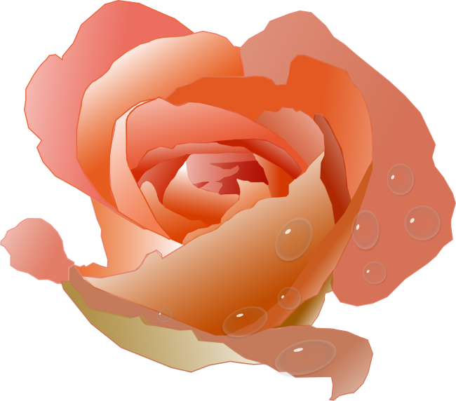 Peach color flower clipart png free download coral-rose.png (650×572) | *CAPTIVATING CORAL | Pinterest | Popular ... png free download