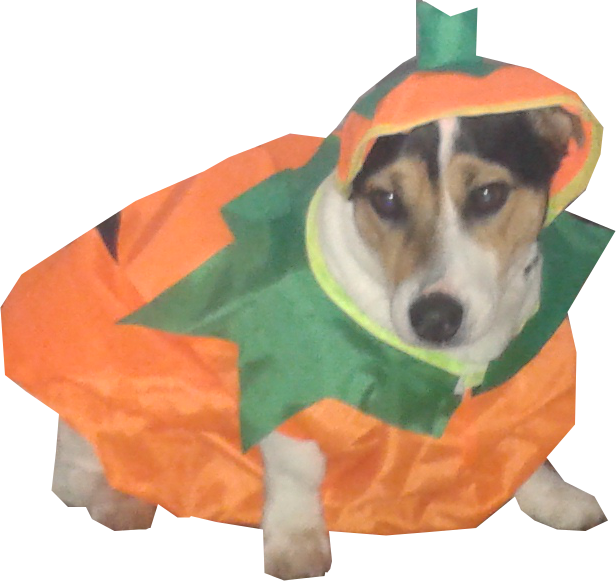 Corgi pumpkin clipart picture library BAILEYS HALLOWEEN 2015 | THE SWEETEST LITTLE PUP picture library
