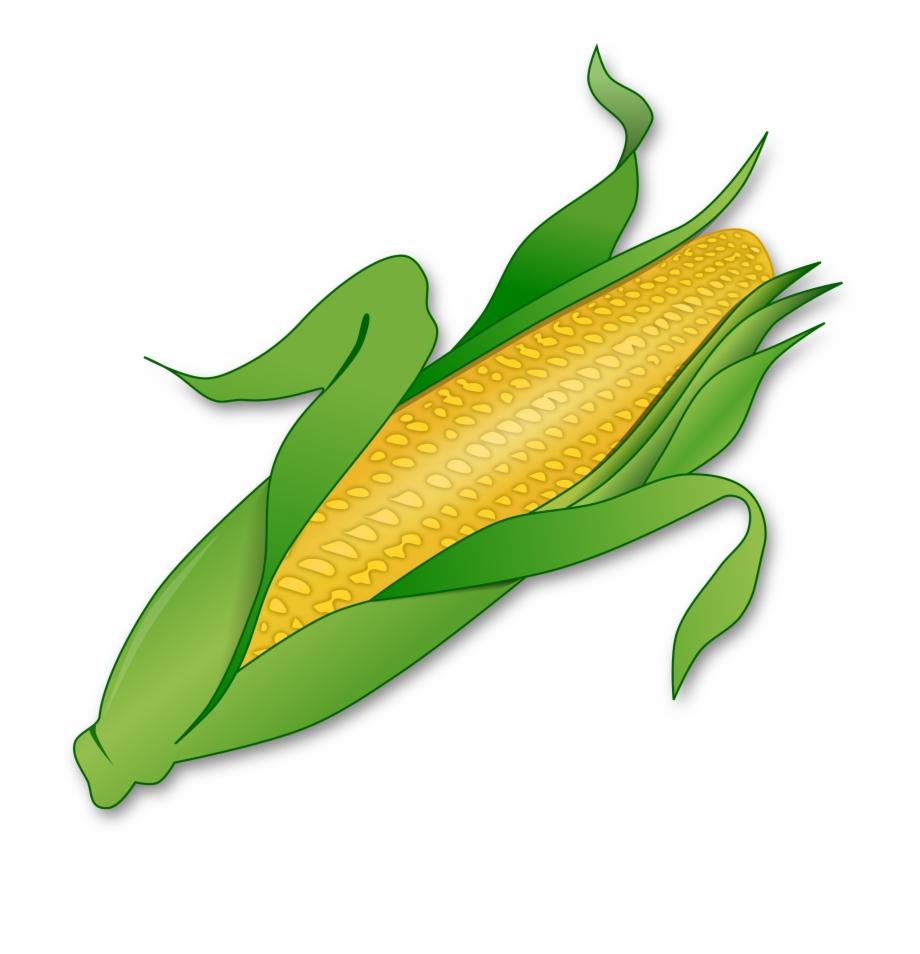 Corn cob clipart clipart royalty free Corn Png - Corn Clipart Free PNG Images & Clipart Download ... clipart royalty free