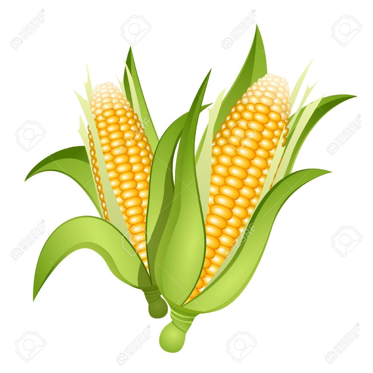 Corn cob clipart svg library Corn cob clipart » Clipart Portal svg library
