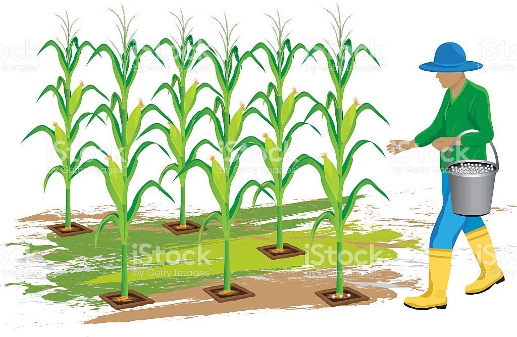 Corn harvest clipart image black and white download Cornfield Clipart corn harvest 5 - 1024 X 667 Free Clip Art ... image black and white download