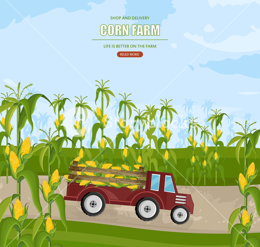 Corn harvest clipart banner freeuse library Truck with corn harvest Vector. Maize fields autumn season ... banner freeuse library