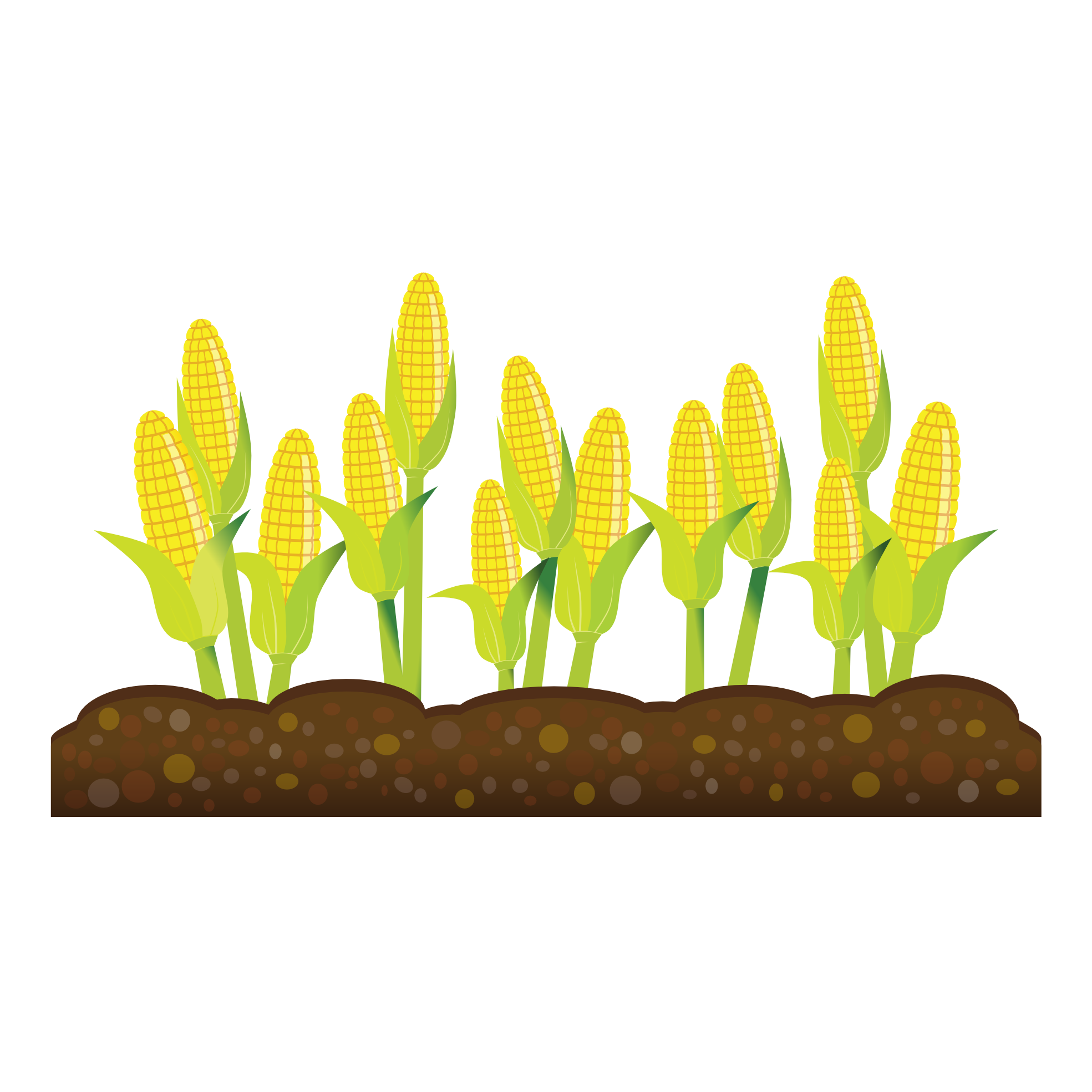 Cornfield clipart svg transparent Corn field clip art clipart images gallery for free download ... svg transparent