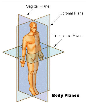 Coronal plane clipart. Planes of motion athlepedia