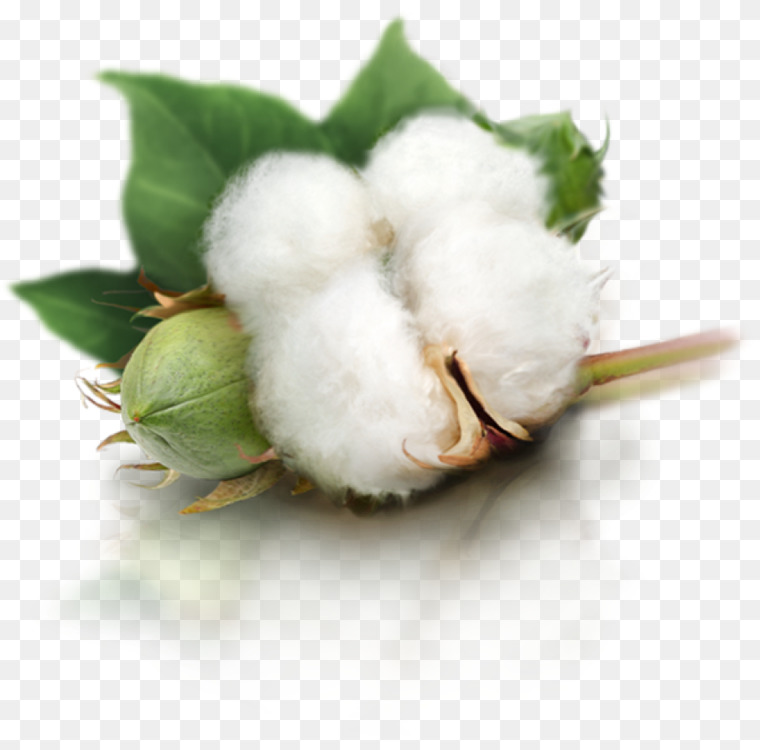 Cotton fiber cliparts png library download Flower,Cotton,Yarn Transparent PNG - Free to modify, share, and use ... png library download
