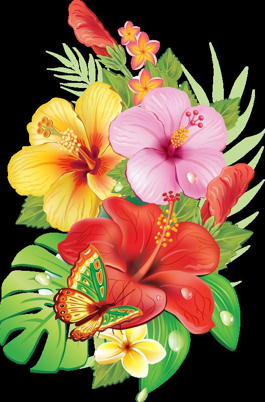 Flower burst clipart clip art transparent stock 36d52cc5.png (527×800) | PATTERNS | Pinterest | Illustrations clip art transparent stock
