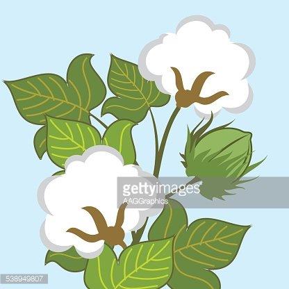 Cotton plant clipart png freeuse Cotton Plant Closeup premium clipart - ClipartLogo.com png freeuse
