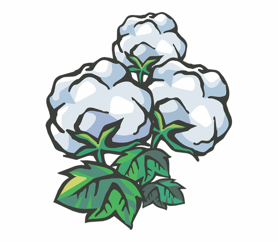 Cotton plant clipart picture royalty free download Cotton Cotton Ball Cotton Plant - Clip Art Cotton Transparent Free ... picture royalty free download