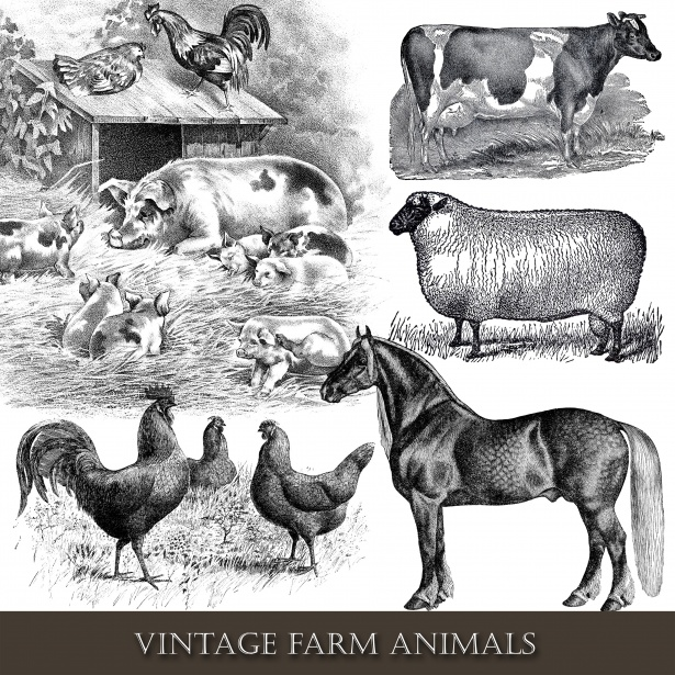 Cow and chicken clipart black and white free banner royalty free stock Farm Animals Vintage Clipart Free Stock Photo - Public Domain Pictures banner royalty free stock