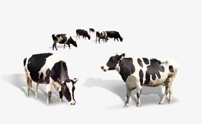 Cow herd clipart banner transparent download Cattle herd clipart 4 » Clipart Portal banner transparent download