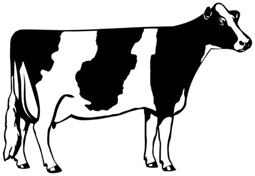 Working cattle clipart graphic transparent stock Cow Outline Clip Art Free, coloring page of a cow - American ... graphic transparent stock
