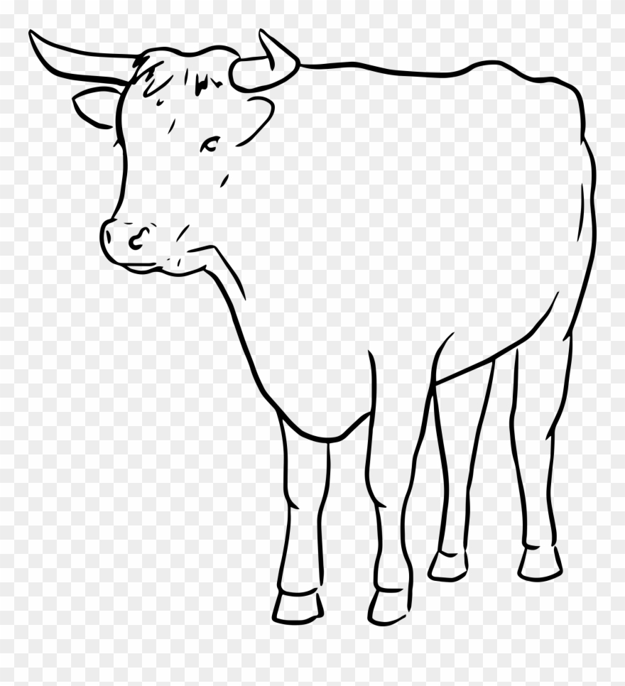 Cow outline clipart image free stock Cow Clip Art Outline - Line Drawing Of A Bull - Png Download ... image free stock