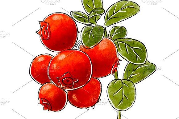 Cowberry clipart