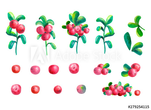 Ripe berry cowberry on white background is isolated. Clipart ... picture black and white download