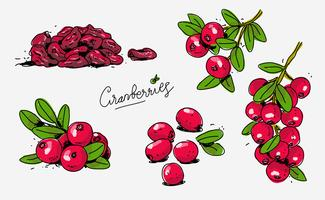 Cowberry Free Vector Art - (42 Free Downloads) svg free