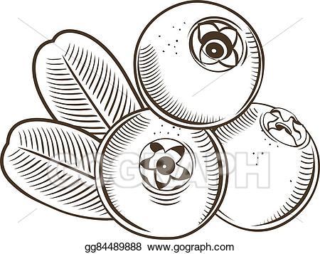 Vector Illustration - Cowberry in vintage style. line art vector ... jpg