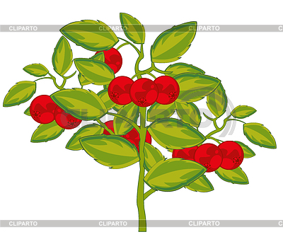 Cowberry | Stock Photos and Vektor EPS Clipart | CLIPARTO svg black and white download