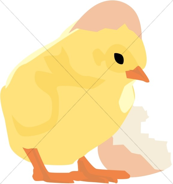 Baby chick and. Cracked easter egg clipart