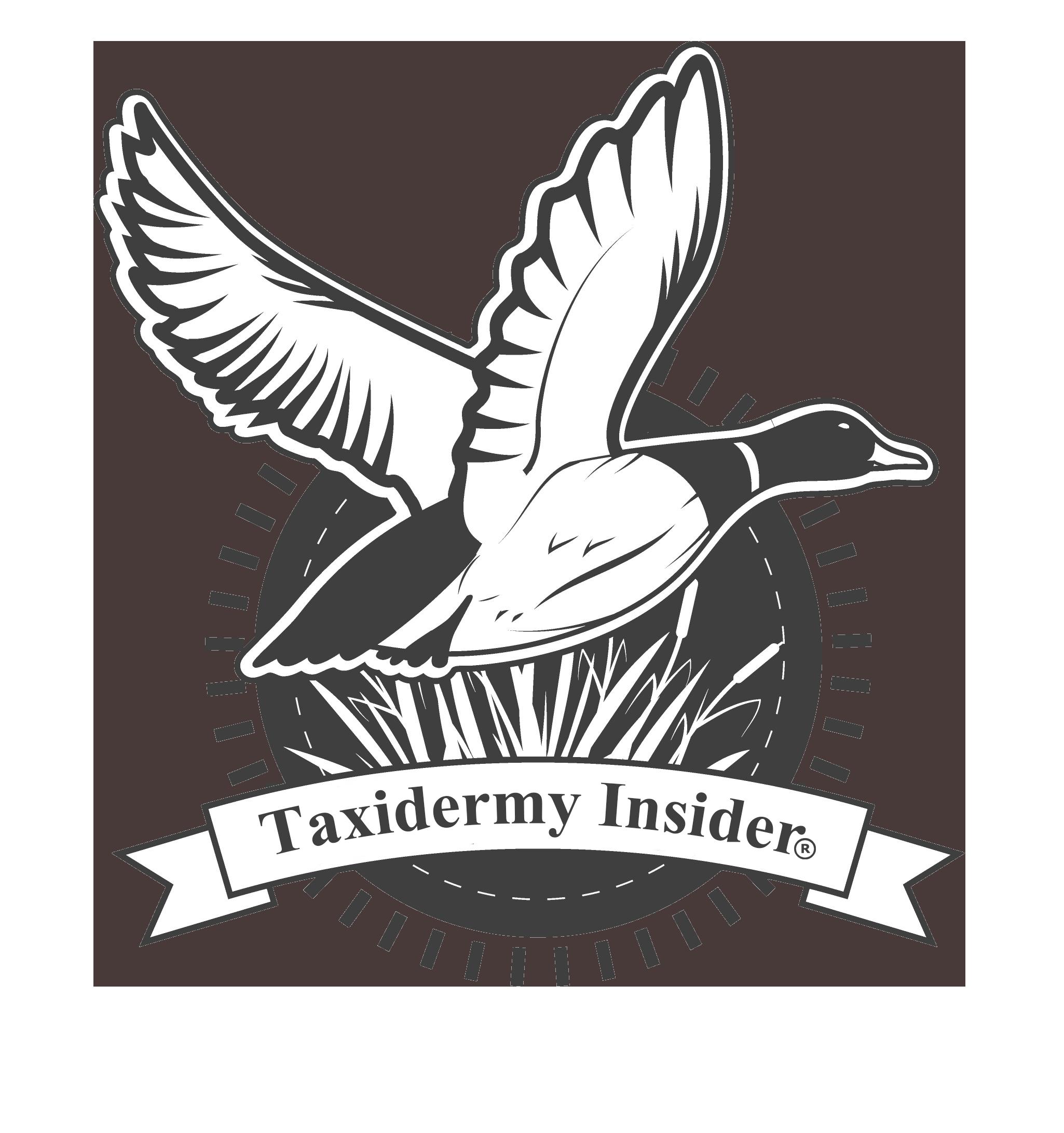 Turkey wings clipart jpg download Taxidermy Insider – Learn Taxidermy Online jpg download