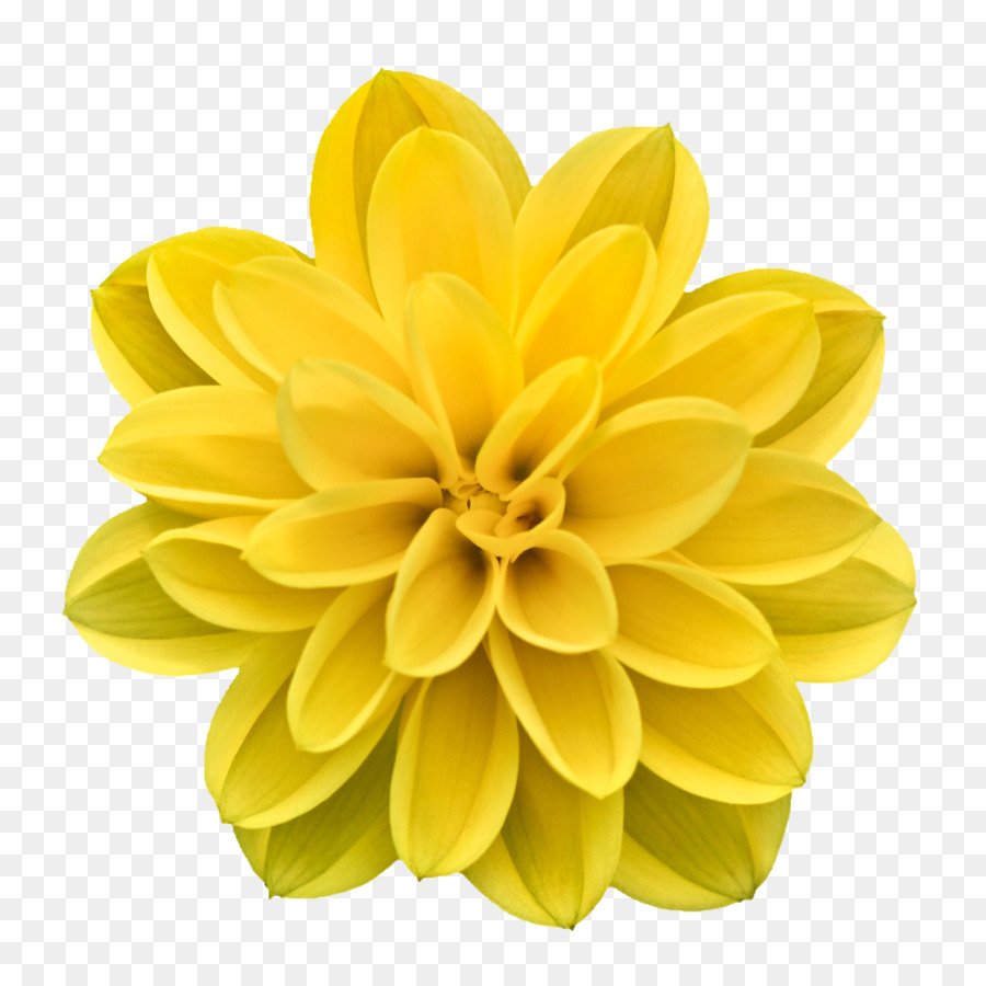 Creative flowers clipart clip transparent Flowers Clipart Background png download - 1500*1500 - Free ... clip transparent
