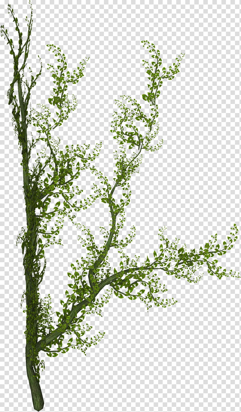 Creepers clipart png royalty free Creepers n Vines, green-leafed plant transparent background PNG ... png royalty free