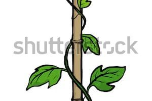 Creepers clipart image library download Climbers and creepers clipart 6 » Clipart Portal image library download