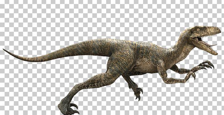 Cretaceous clipart picture library download Jurassic Park Velociraptor Deinonychus Late Cretaceous Dinosaur PNG ... picture library download