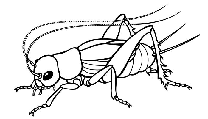 Cricket bug clipart clip library Cricket bug clipart black and white - Clip Art Library clip library