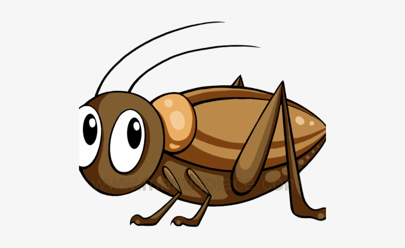 Cricket bug clipart vector black and white download Brown Cricket Insect - Brown Cricket Insect Clipart PNG Image ... vector black and white download