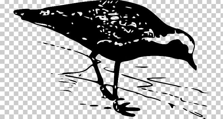 Crocodile and plover bird clipart black and white jpg freeuse download Golden Retriever Bird Labrador Retriever Plover PNG, Clipart ... jpg freeuse download