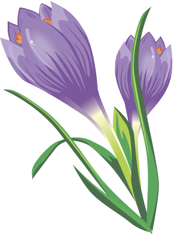 Crocus clipart free royalty free library Free Crocus Cliparts, Download Free Clip Art, Free Clip Art on ... royalty free library