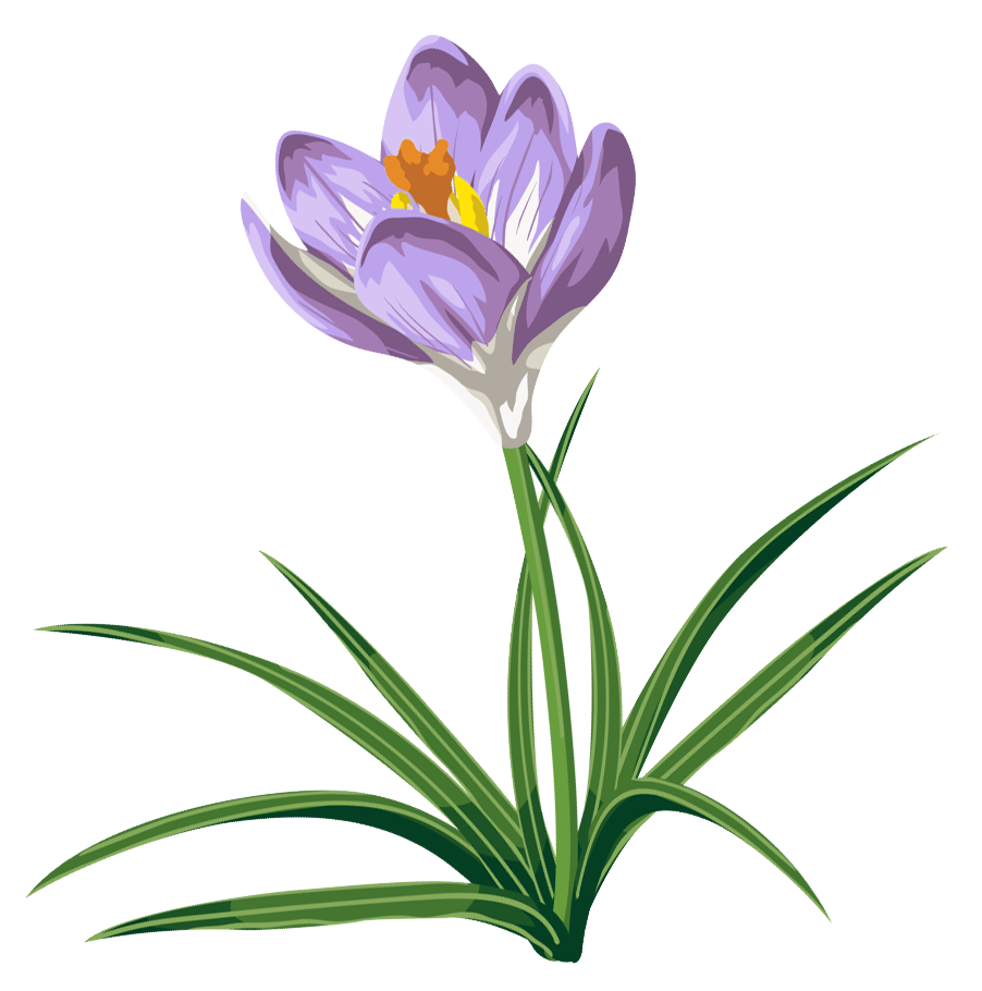 Crocus clipart free svg royalty free download Free Crocus Flower Cliparts, Download Free Clip Art, Free Clip Art ... svg royalty free download