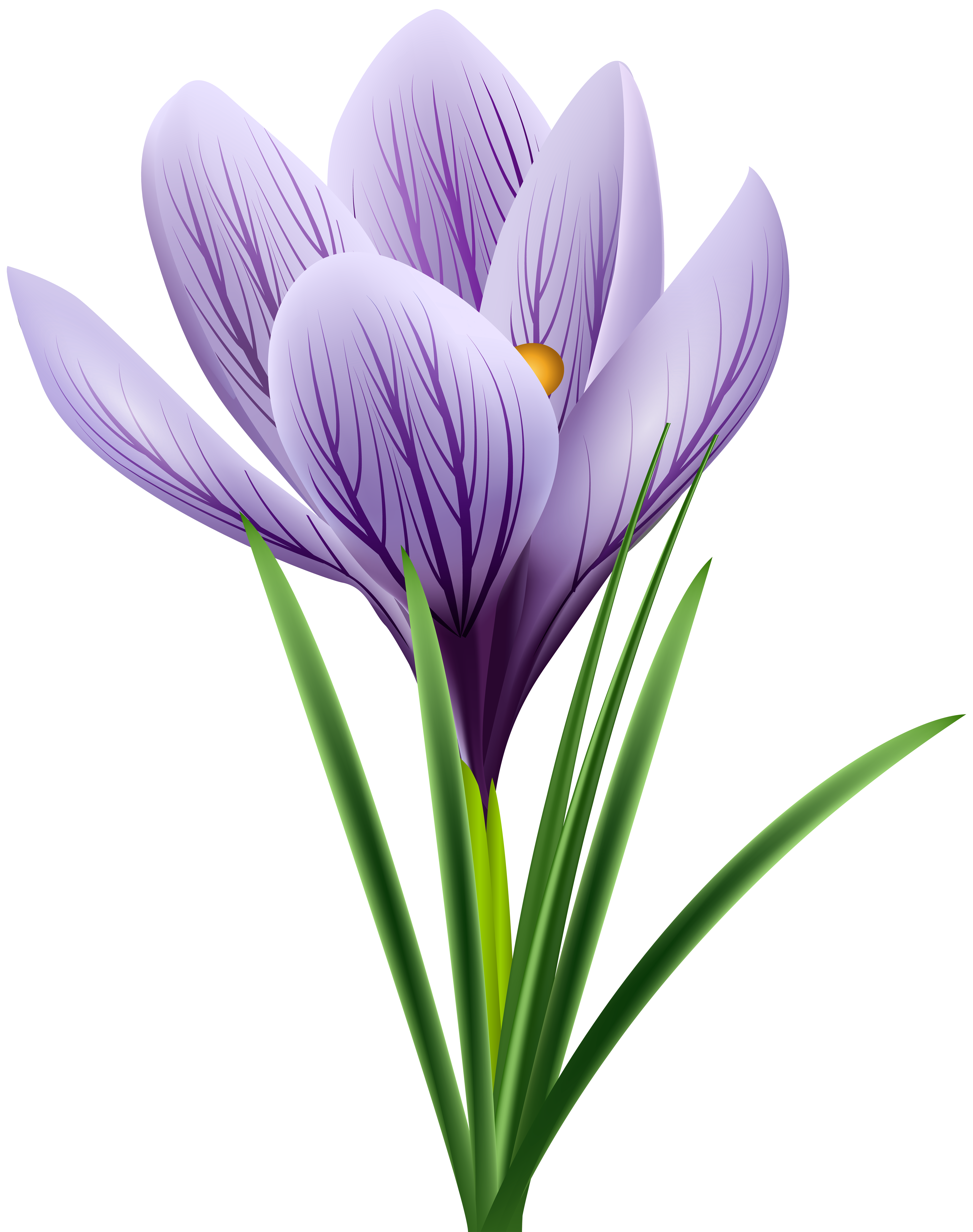 Crocus clipart free banner library stock Purple Crocus Transparent PNG Clip Art Image | Gallery Yopriceville ... banner library stock