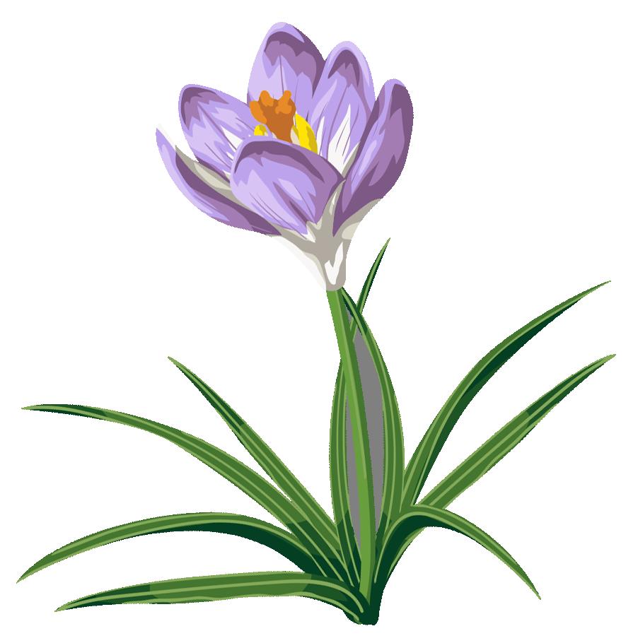 Crocus flower clipart svg transparent download Crocus PNG Clipart Picture | Gallery Yopriceville - High-Quality ... svg transparent download