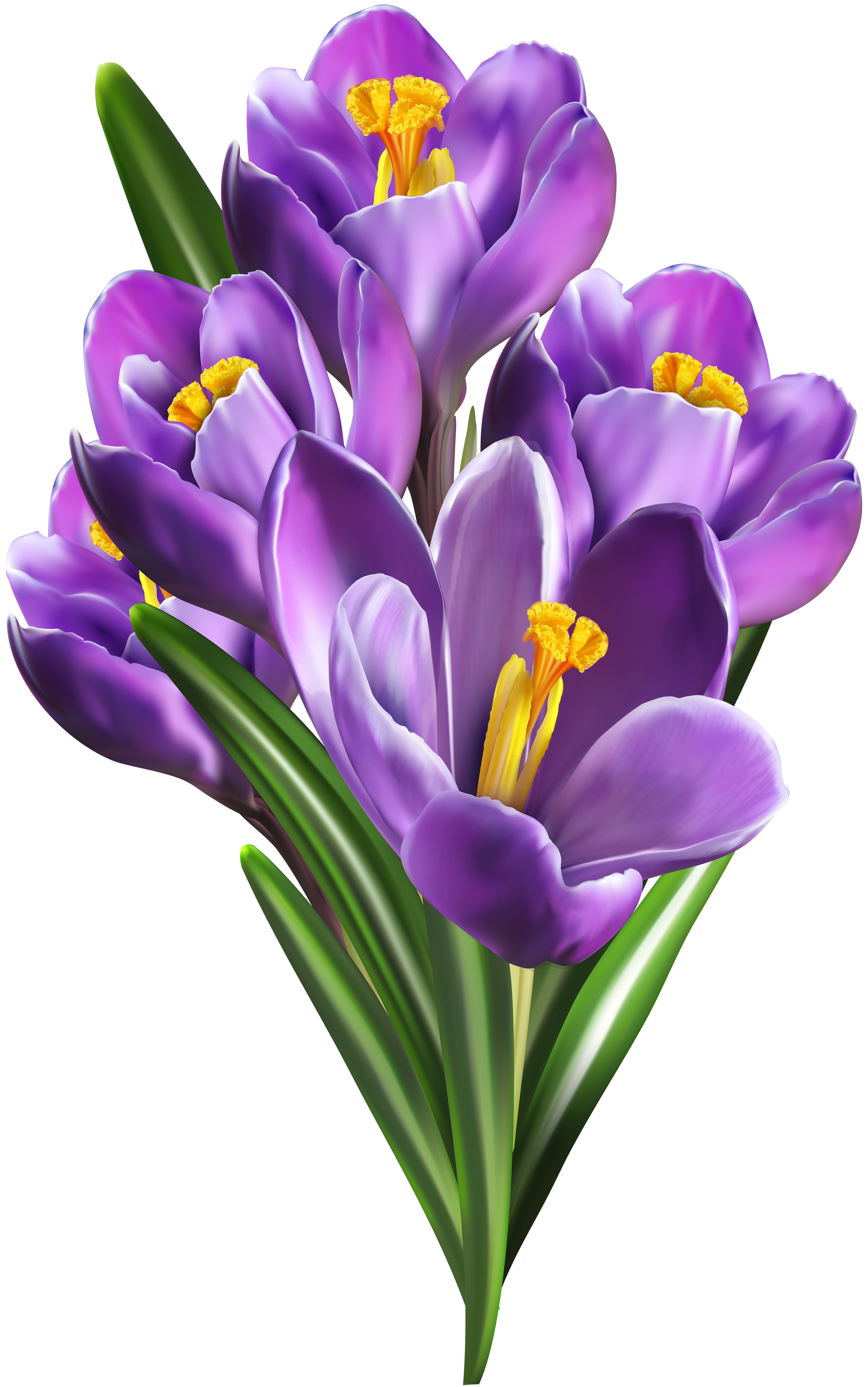Crocus flower clipart freeuse library Image file formats Lossless compression - Purple Crocuses PNG Clip ... freeuse library