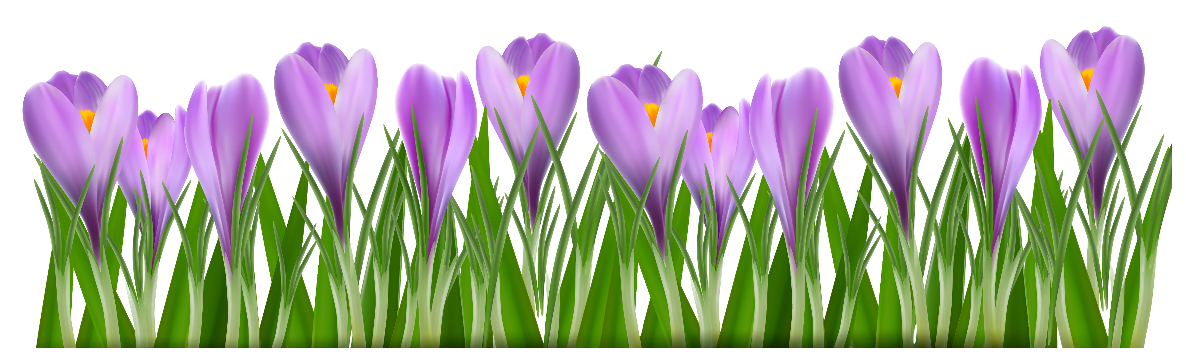 Crocus flower clipart png freeuse library Grass with Crocus PNG Clipart Picture | Gallery Yopriceville - High ... png freeuse library