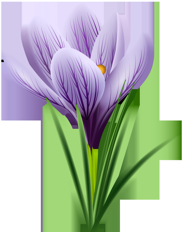 Crocus flower clipart clipart free Purple Crocus Transparent PNG Clip Art Image | Gallery Yopriceville ... clipart free