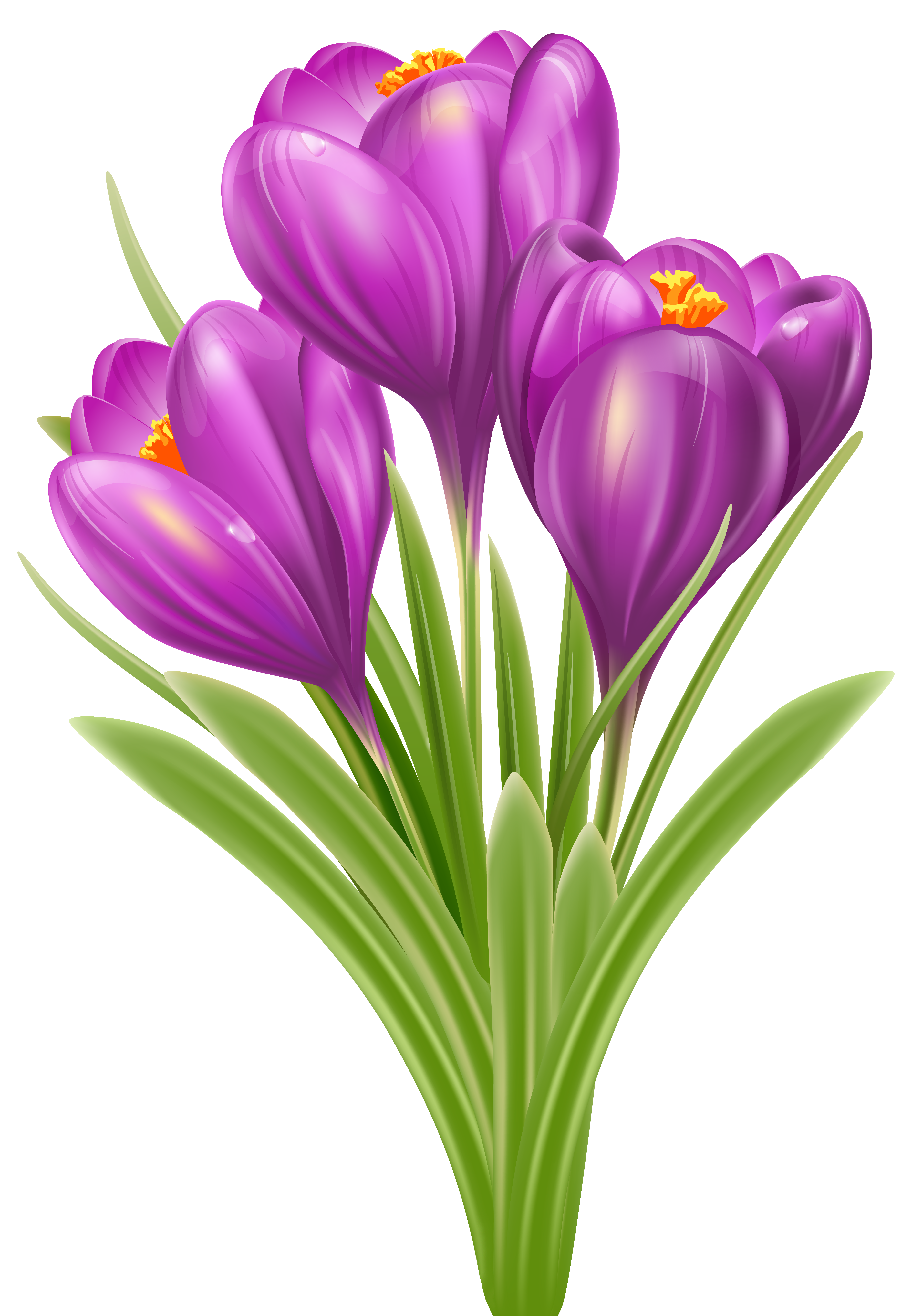 Crocus flower clipart clip royalty free download Spring Crocus PNG Image | Gallery Yopriceville - High-Quality ... clip royalty free download
