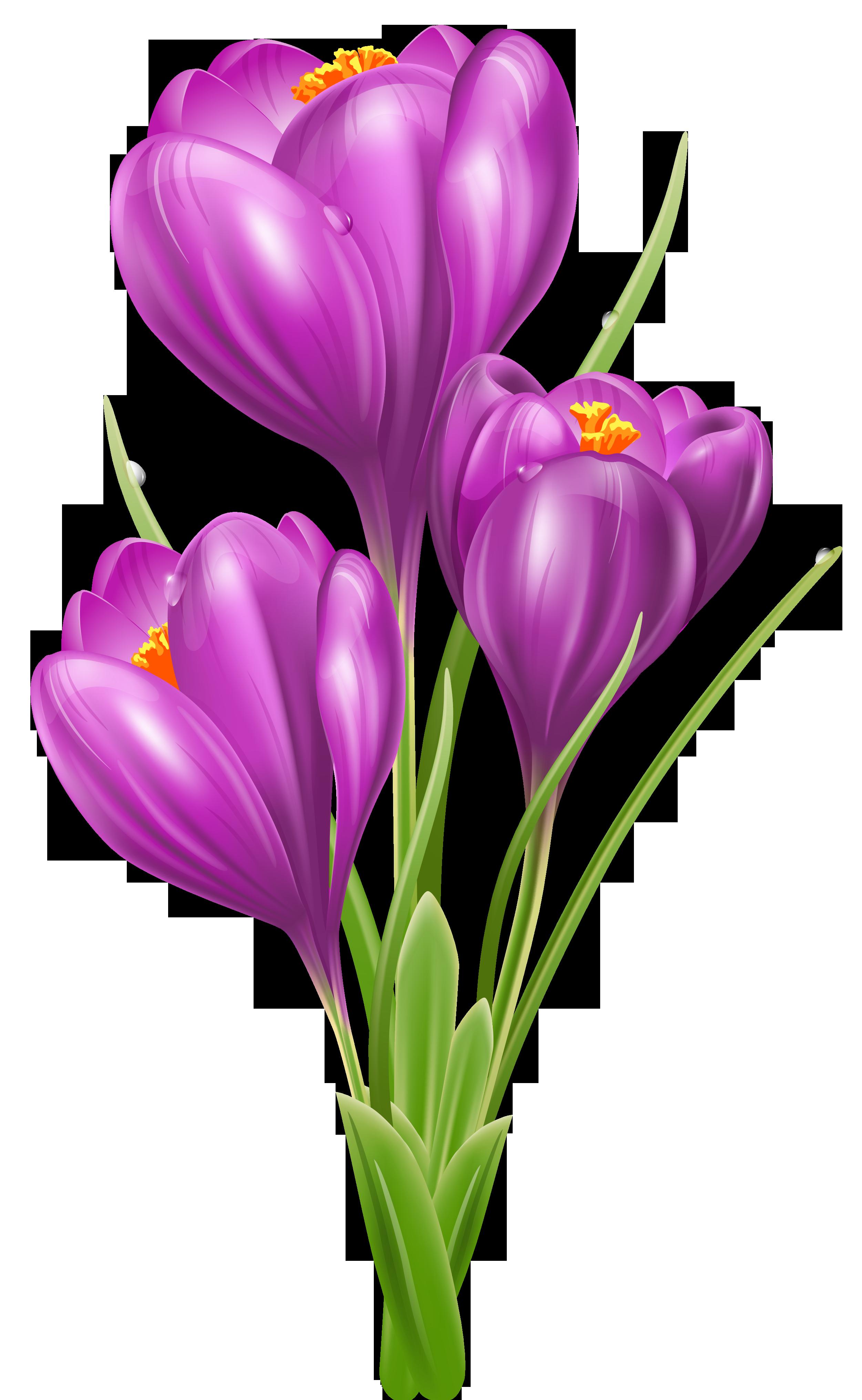 Crocus flower clipart svg free Transparent Crocus PNG Clipart Picture | CLIP ART FLOWERS ... svg free