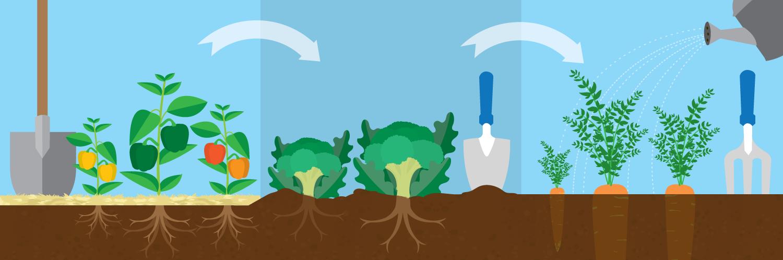 Crop rotation clipart svg Three-Year Crop Rotation Plan | Fix.com svg