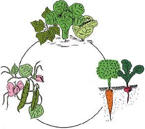 Crop rotation clipart vector black and white stock Crop Rotation: Onions⏩Potatoes⏩Umbellifiers(root)⏩ Brassicas(cole ... vector black and white stock