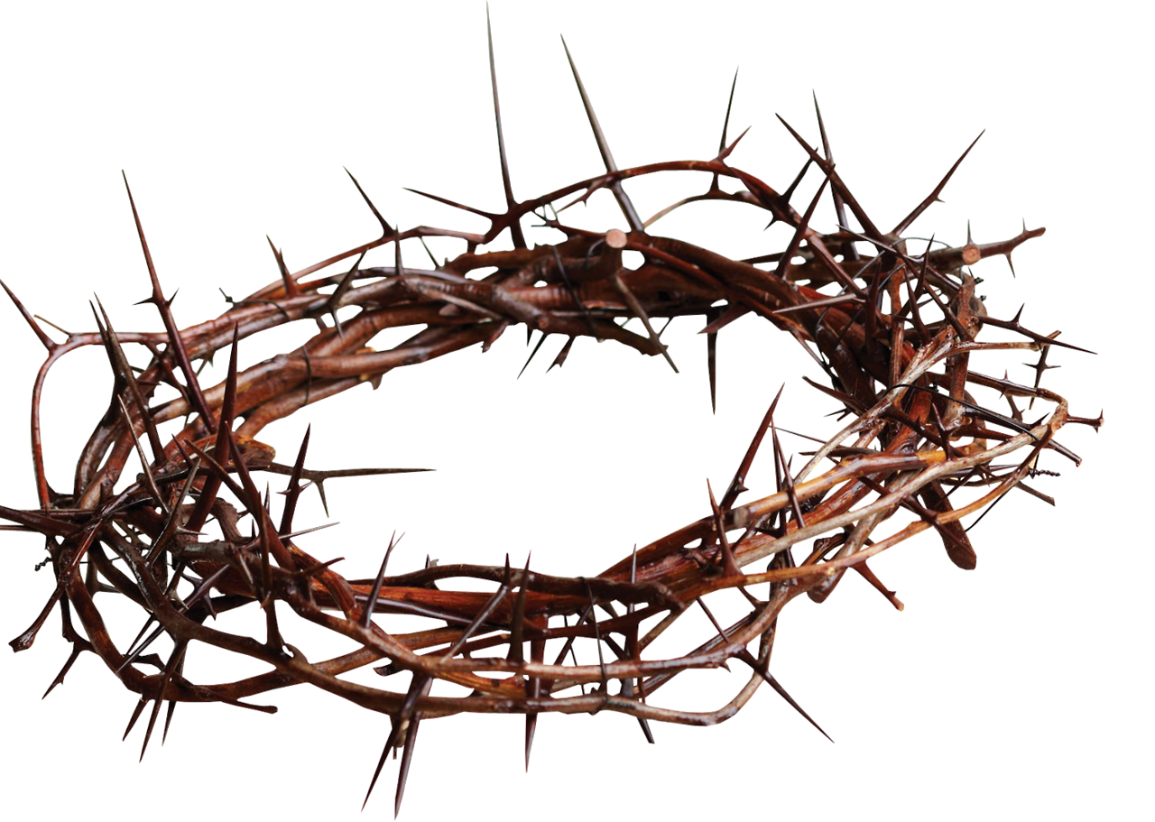 Crown of thorn and glory clipart graphic freeuse stock Crown of thorns Christian cross Symbol Thorns, spines, and prickles ... graphic freeuse stock